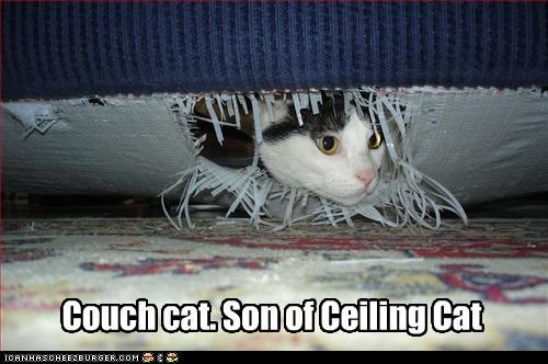 ceiling cat couch - 3676872192