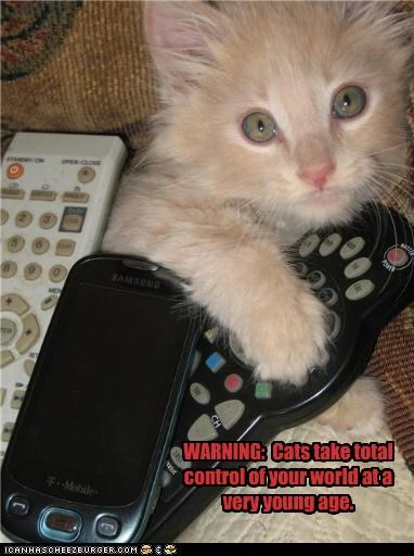 cute kitten remote control world domination - 3676934400