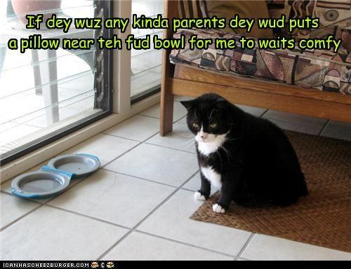 If dey wuz any kinda parents dey wud puts  a pillow near teh fud bowl for me to waits comfy