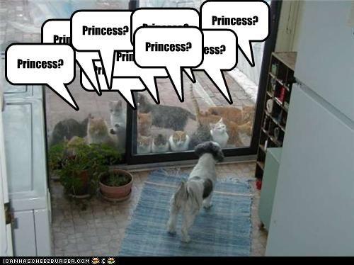 Princess? Princess? Princess? Princess? Princess? Princess? Princess? Princess? Princess?