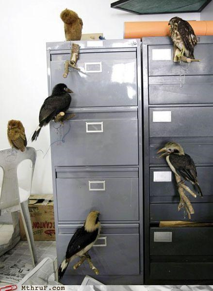 annoying birds creepy decoration dickhead co-workers feces file cabinet gross mess noisy office pets pets pooping everywhere squawking Terrifying weird wtf - 3679771648