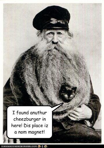 animal cat funny Photo photograph portrait - 3680218624