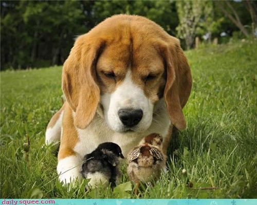 bird,chicks,puppy