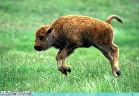 bounce buffalo Milo and Otis - 3681053440