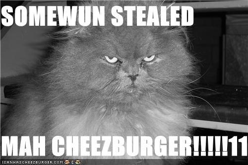 Cheezburger Image 3682156288
