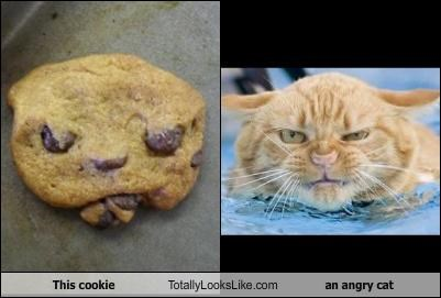 angry animals Cats cookies food