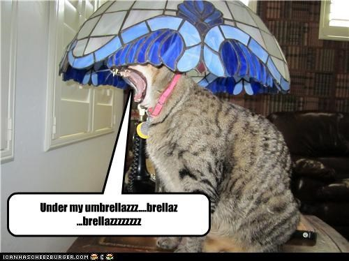 caption,captioned,cat,confused,lamp,lyrics,rihanna,song,umbrella