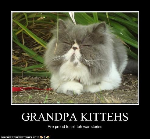 GRANDPA KITTEHS Are proud to tell teh war stories