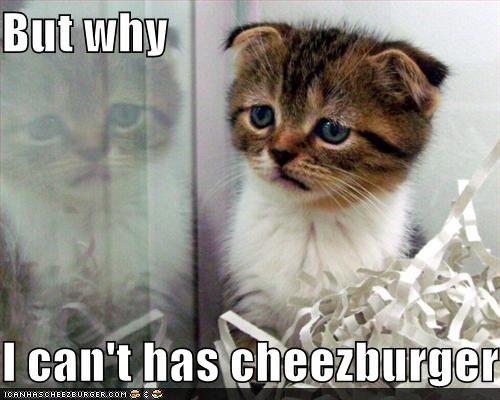 Cheezburger Image 3683603456