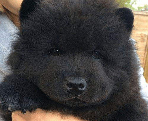 floof dogs list bear what are you squee - 368389