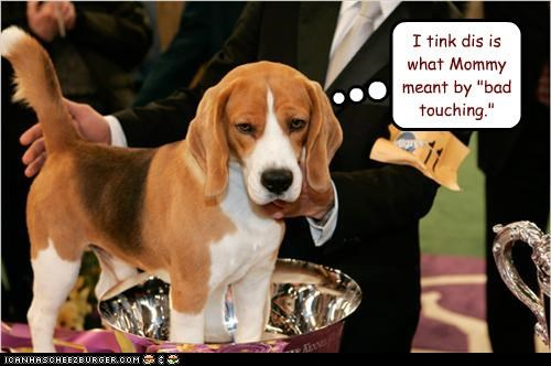 beagle,dog show,judge,touch