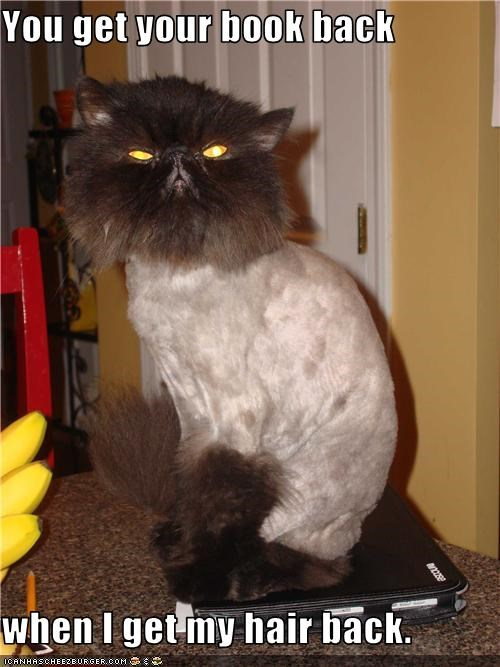 do not want haircut lion cut - 3686609920