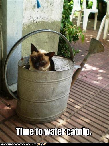 catnip want water - 3688149760