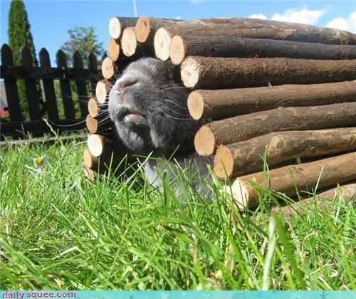 bunny cheeks cute - 3688769792