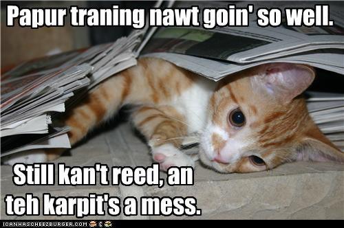 accident caption captioned cat explanation FAIL kitten mess paper training potty training reading tabby - 3688776448