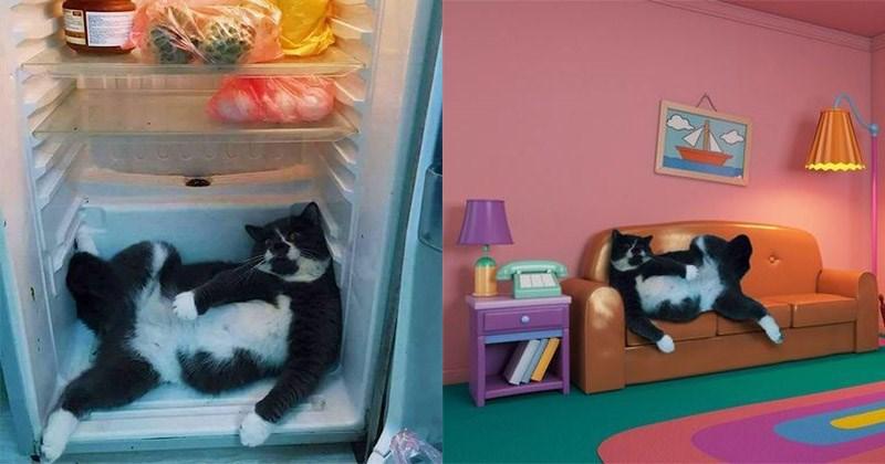 gato refrigerador