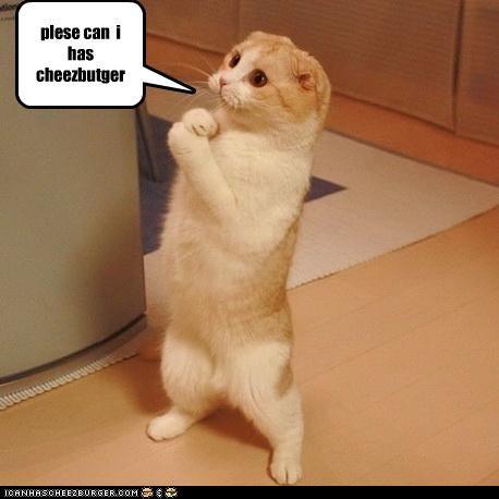 Cheezburger Image 3690285824