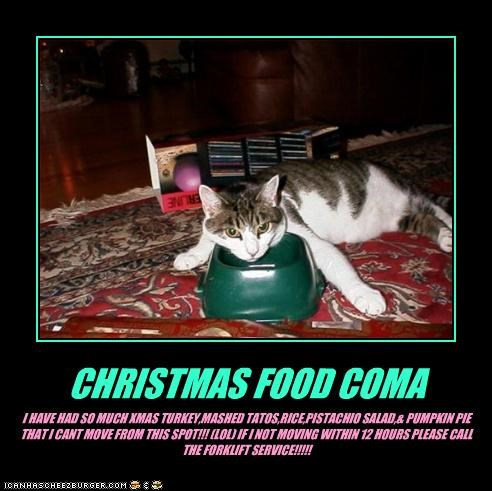 Christmas Food Coma Cheezburger Funny Memes Funny Pictures