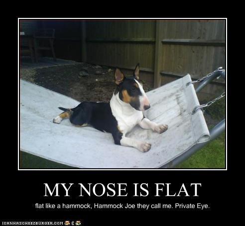 MY NOSE IS FLAT flat like a hammock, Hammock Joe they call me. Private Eye.
