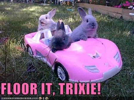 bunnies car cute driving Hall of Fame lolbuns - 3691296512