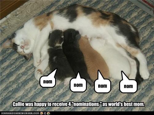 cute kitten momcat nom nom nom - 3691297280