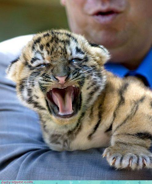 cub nerd jokes tiger - 3692129792