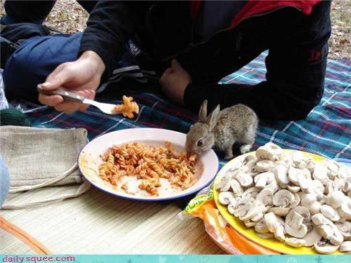 bunny noms Om Nom Monday - 3692175360