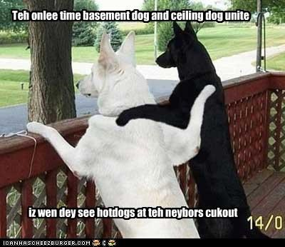 barbecue basement dog black ceiling dog german shepherds hotdogs mixed breed white - 3693289728