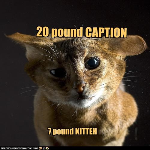 20 pound CAPTION 7 pound KITTEH