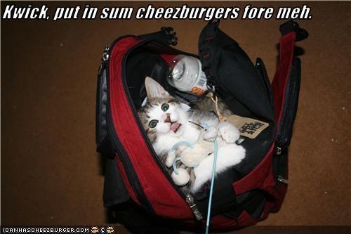 Cheezburger Image 3696249600