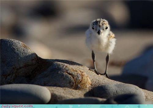 baby bird whatsit wednesday - 3696318208