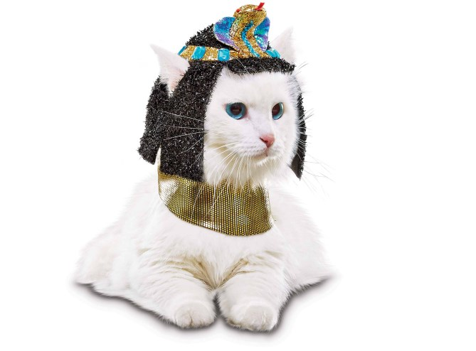 halloween costumes halloween Cats funny - 3698181