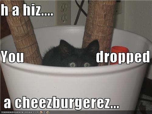 Cheezburger Image 3698258944