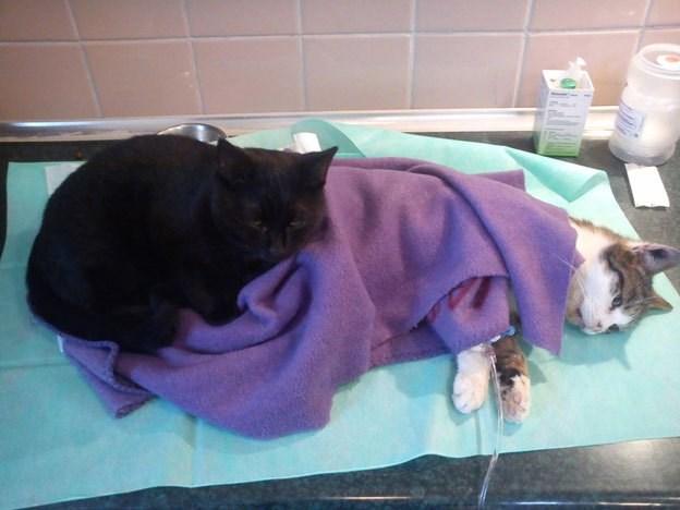 nurse cat in poland
