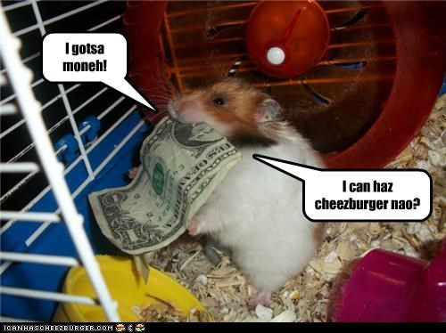 I can haz cheezburger nao? I gotsa moneh!