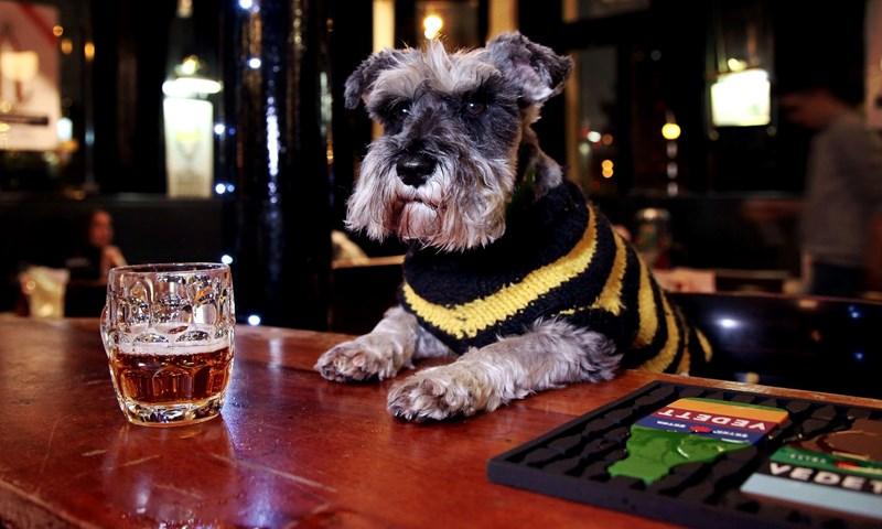 the pub dogs of Britain