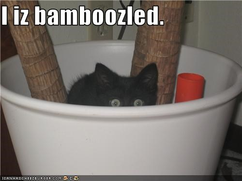 bamboo bamboozled caption captioned cat kitten pun - 3699702528
