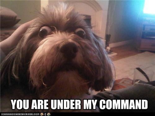 YOU ARE UNDER MY COMMAND