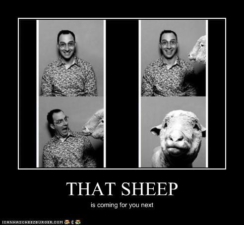 THAT SHEEP is coming for you next