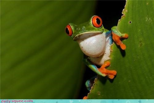 boopable cute tree frog - 3700513280