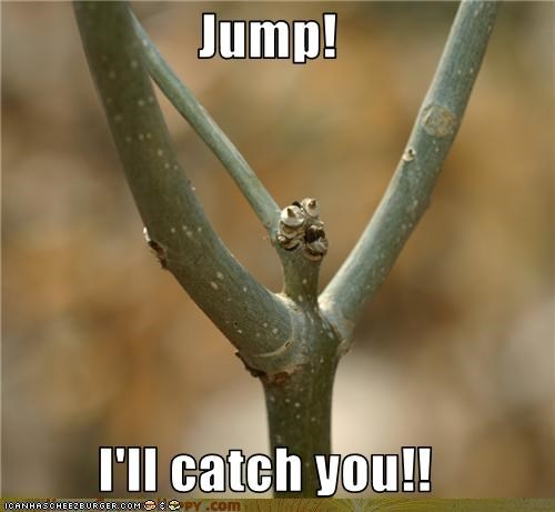 Jump! I'll catch you!! - Cheezburger - Funny Memes | Funny Pictures