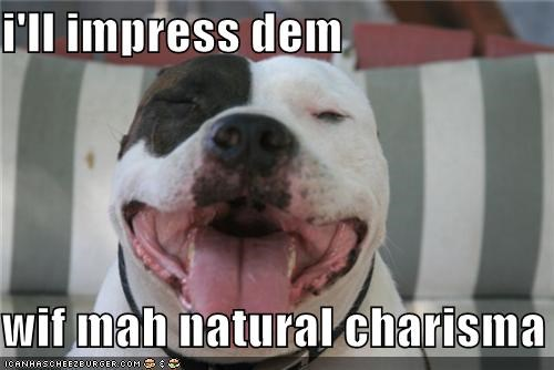 happy face impress natural charisma pit bull tongue - 3701525504