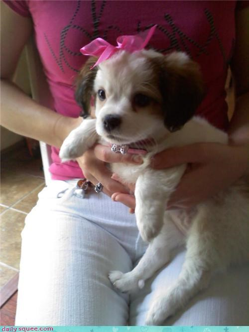 girly puppy what breed - 3701596160