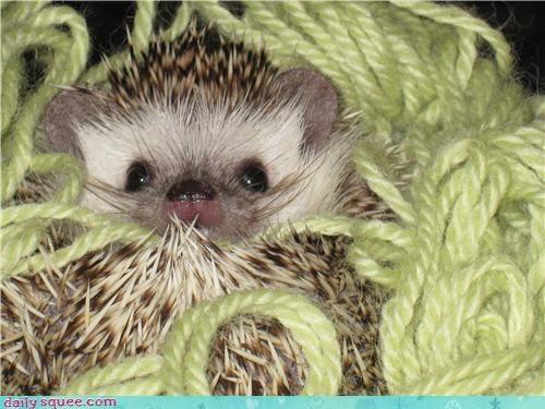ears face hedgehog - 3702706944