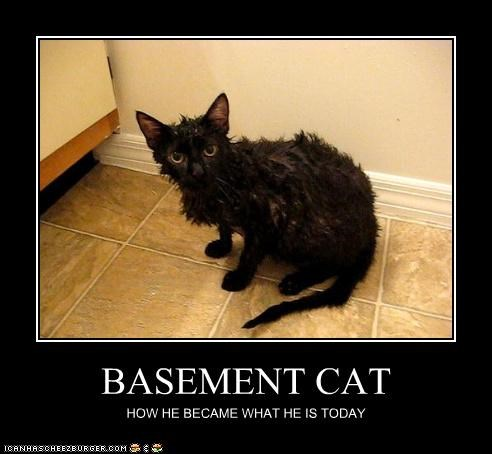 BASEMENT CAT HOW HE BECAME WHAT HE IS TODAY