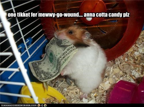 cute hamster lolhamsters money