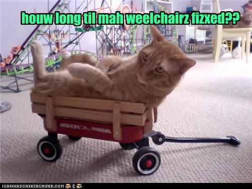 Cheezburger Image 3703700992