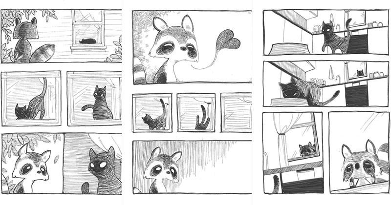 mapache conquista gata
