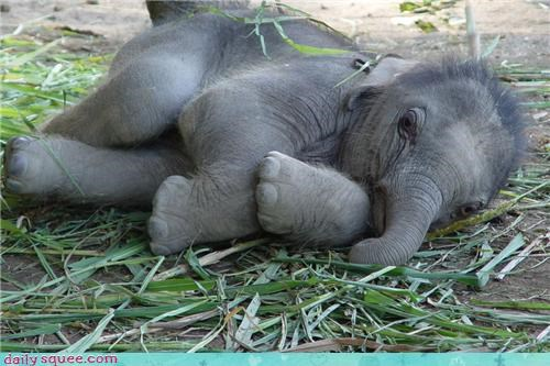 baby Day of Rest elephant - 3706212608