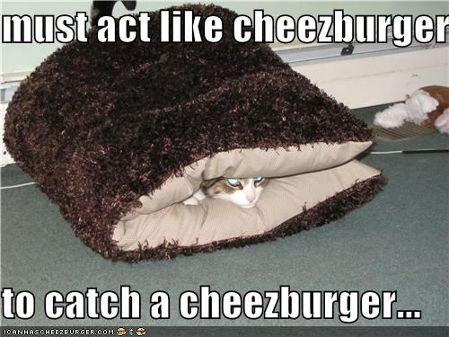 Cheezburger Image 3706546944